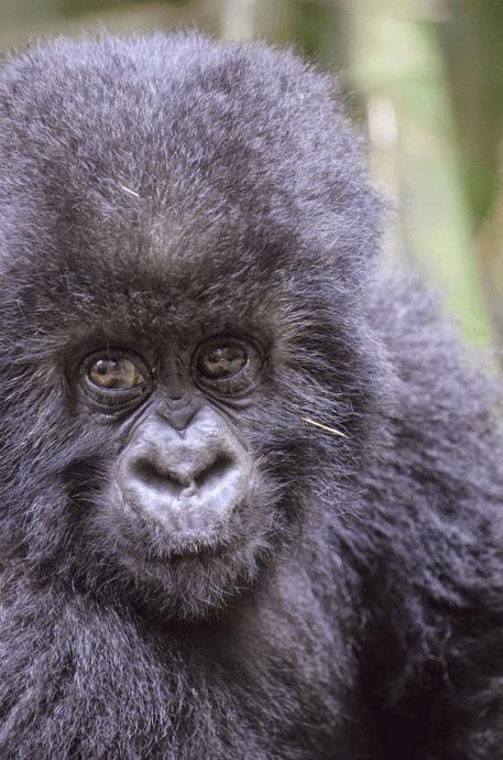 Rwanda Gorilla packing list