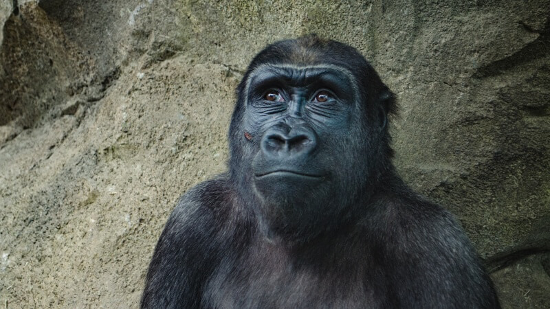Packing List: Gorilla Tracking in Rwanda